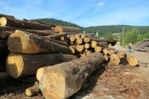 Auvergne-Rhône-Alpes veut booster la filière Forêt/Bois de la région
