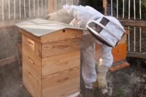 Récolte de miel urbain à la Maison de la Nature