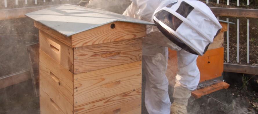 Des ruches à Roche-la-Molière
