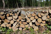 «Bois énergie et collectivités» où en est-on?