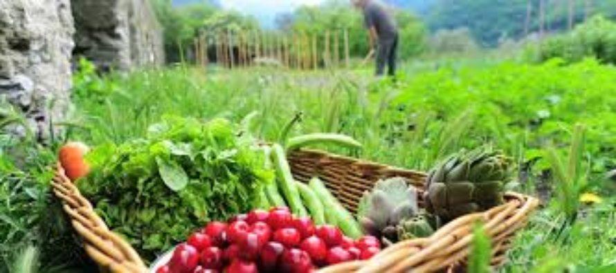 Supercagette: le drive des produits locaux