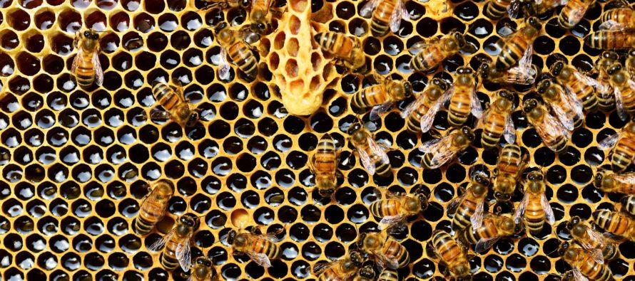 L'Apiculture Stéphanoise fait le buzzz