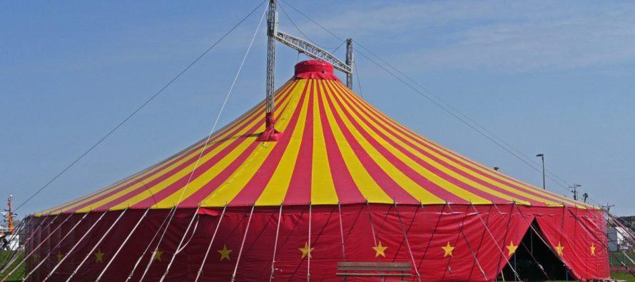 Plus d'Animaux de cirque, à St Martin la Plaine.