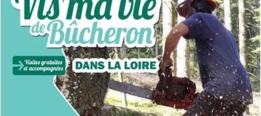 Vis ma vie de bûcheron dans la Loire