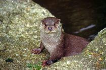 A la découverte des castors et de la loutre