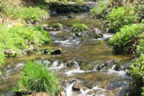 Les points d'eau doivent être protégésde l'usage des pesticides!