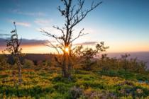 Contrat Vert et Bleu «Grand Pilat»  en faveur de la biodiversité