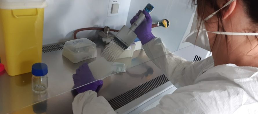 Le Laboratoire TERANA réquisitionné pour réaliser les analyses PCR